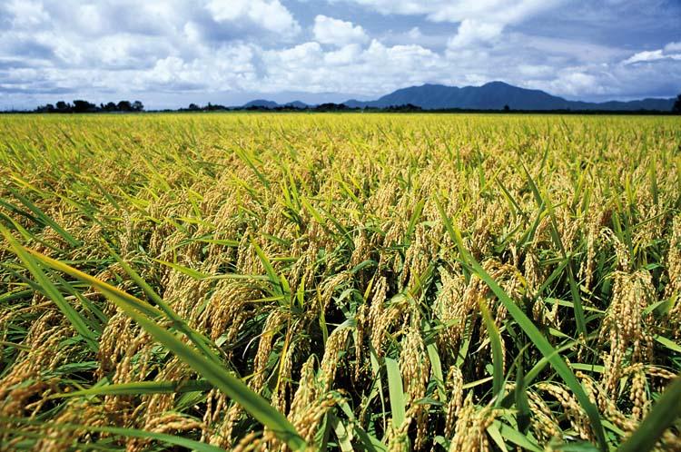riz-niigata-zoomjapon84